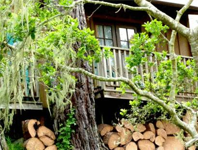 hotel Rustic Cabin like a Treehouse