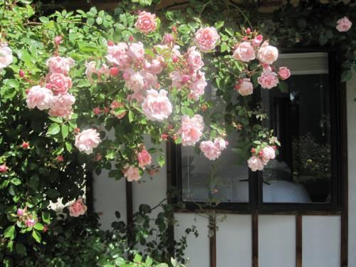 hotel Rose Cottage at The Elms