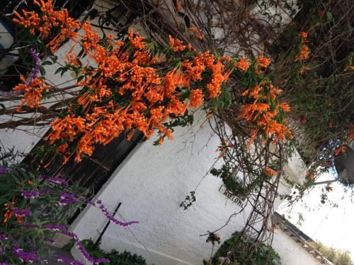 hotel Mansion Samzara Hosteleria