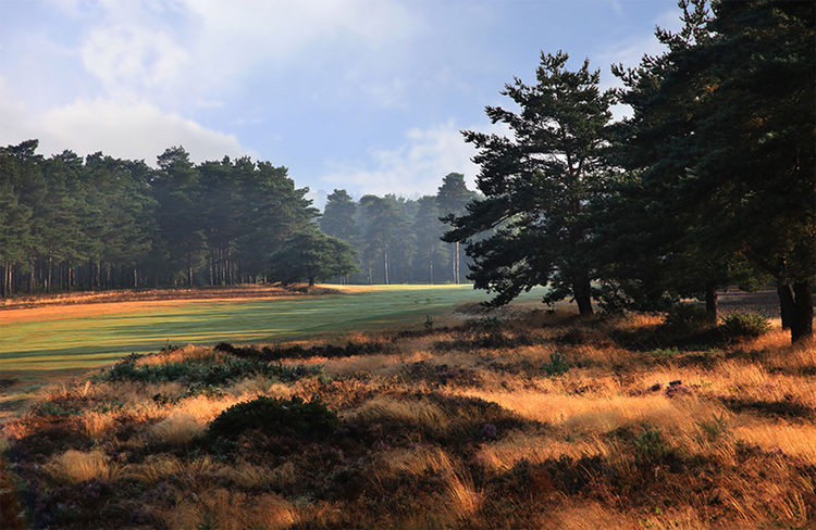 Hankley common golf club cover picture