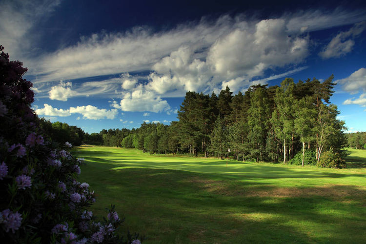 The berkshire golf club cover picture