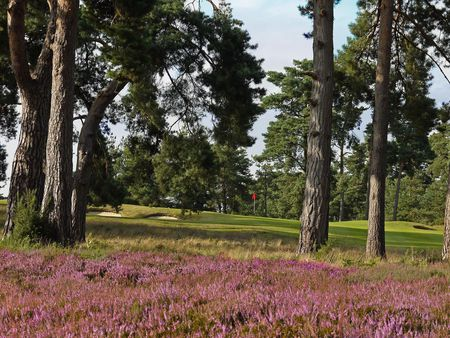Blackmoor Golf Club Cover Picture