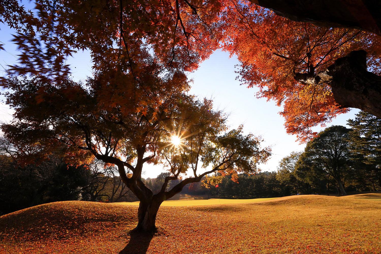 Abiko golf club cover picture