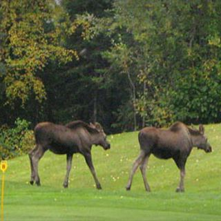 Anchorage golf course cover picture