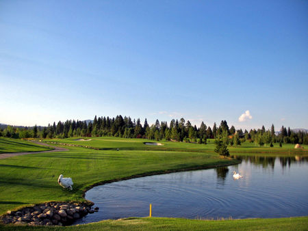 Whitetail Golf Club Cover Picture