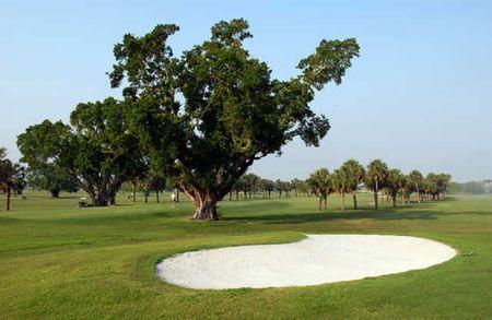 Palmetto Golf Course Cover Picture