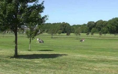 Vestlollands Golf Club Cover