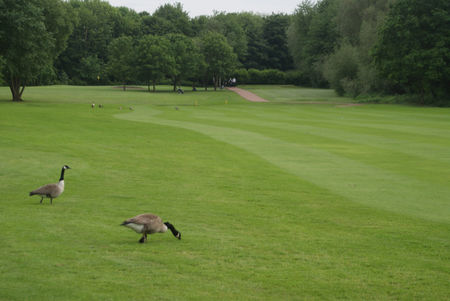 Didsbury Golf Club Cover Picture