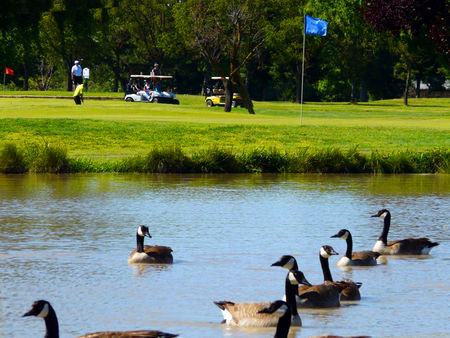 Cordova Golf Course Cover Picture