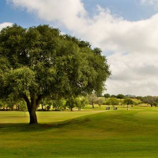 Alsatian golf club cover picture