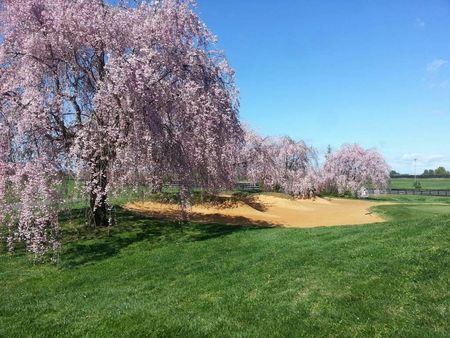 Meadows Farms Golf Course Cover Picture