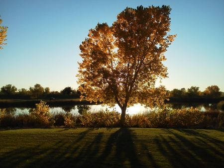 Tamarisk Golf Course Cover Picture