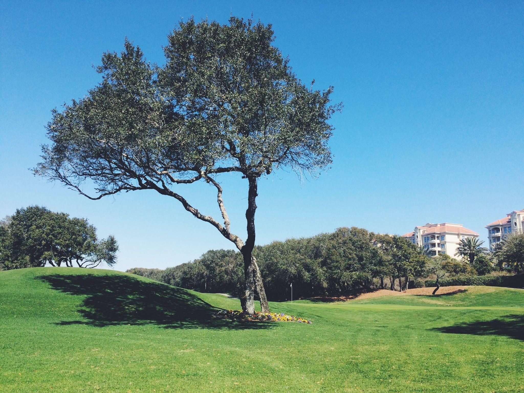 Best Golf Courses On Amelia Island