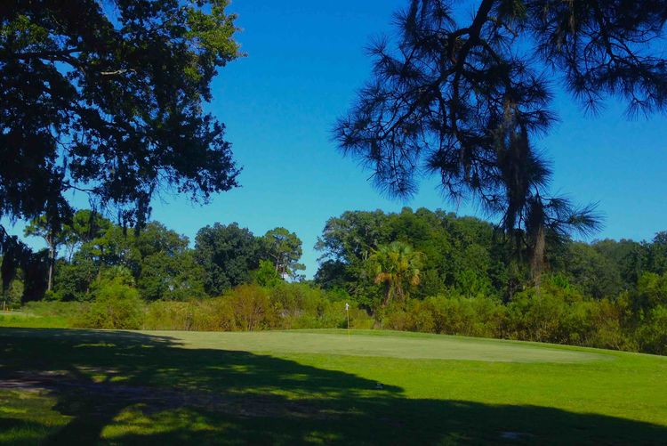 Blue cypress golf club cover picture