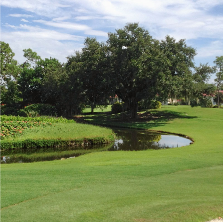 Royal Palm Country Club Cover Picture
