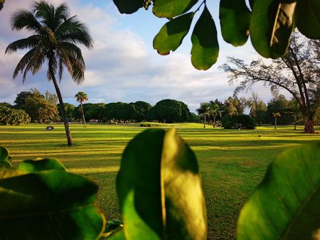 Hollywood beach golf and country club cover picture