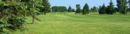 Shamrock golf club cover picture