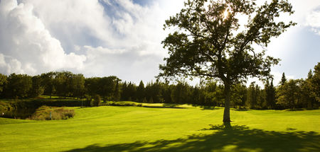 Blueberry Pines Golf Club Cover Picture