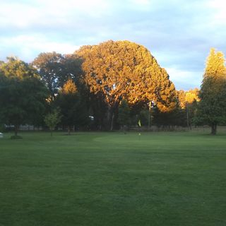 Auburn center golf club cover picture