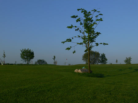 Golf-Club Curau e.V. Cover Picture