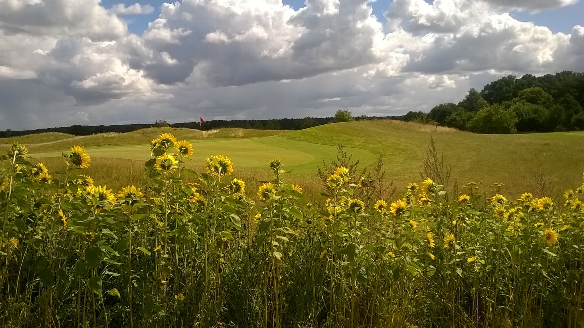 Overview of golf course named Golf-Club Verden e.V.