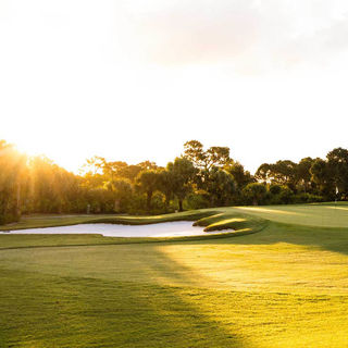 Bent pine golf club cover picture