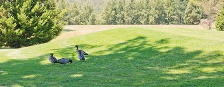 Kangaroo Valley Country Club Cover
