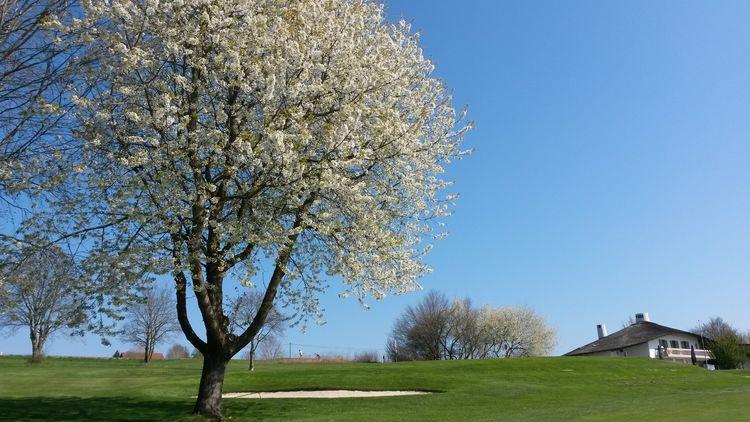 Golfclub schlossberg e v cover picture