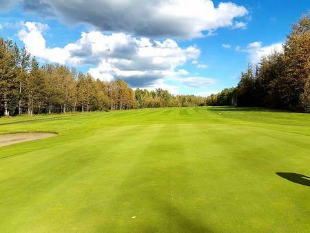 Silver birch golf club cover picture