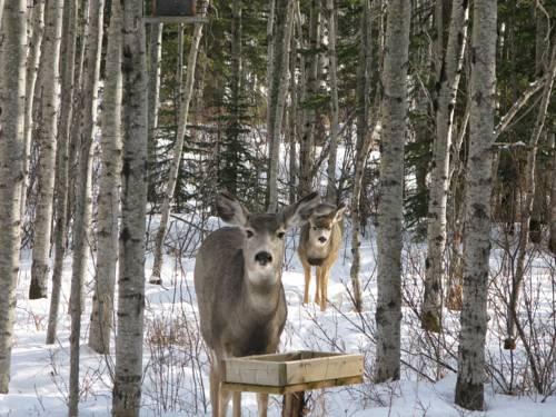 Deer Valley Bed & Breakfast Cover Picture