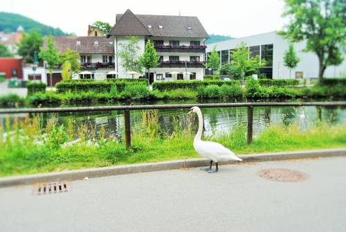Hotel Schiff Nagold Cover Picture