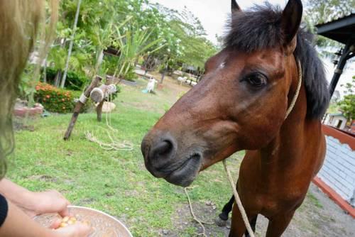 Cowboy Farm Resort Pattaya Cover Picture