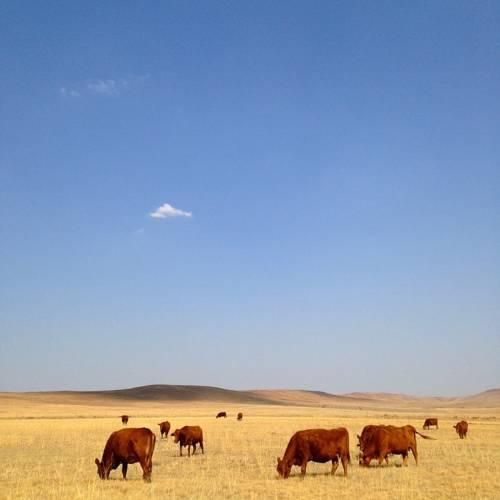 Woudzicht Farm Cover Picture