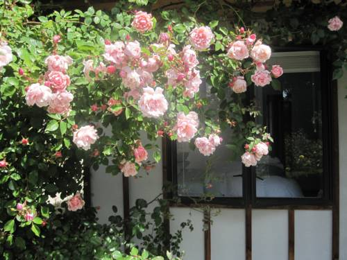 Rose Cottage at The Elms Cover Picture