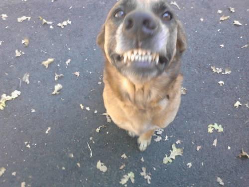 Zen Dog Retreat Cover Picture