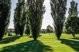 Golf Club I Pioppi Cover Picture